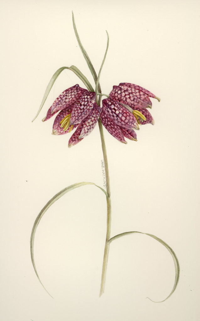 PURPLE_FRITILLARY.jpg